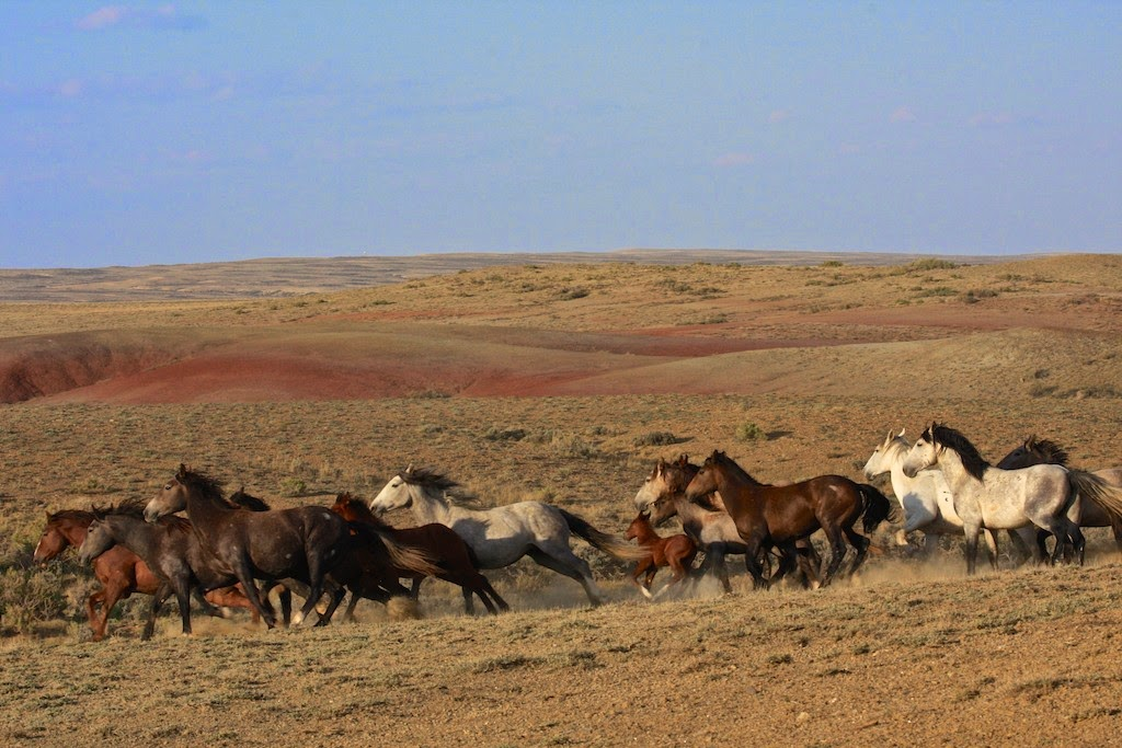 Wyoming Checkerboard Wild Horses