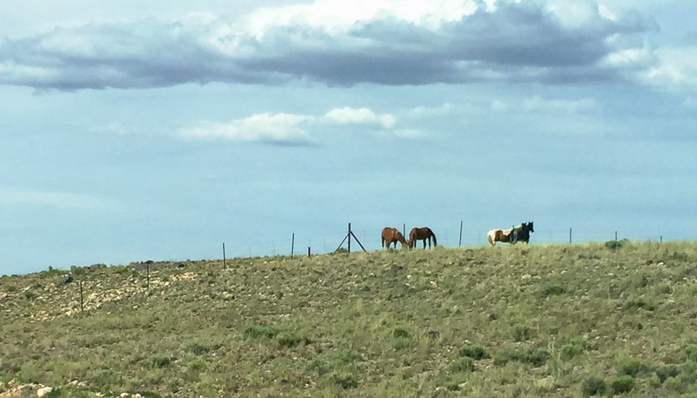 Reservation horses - Photo by Kerry O'Brien
