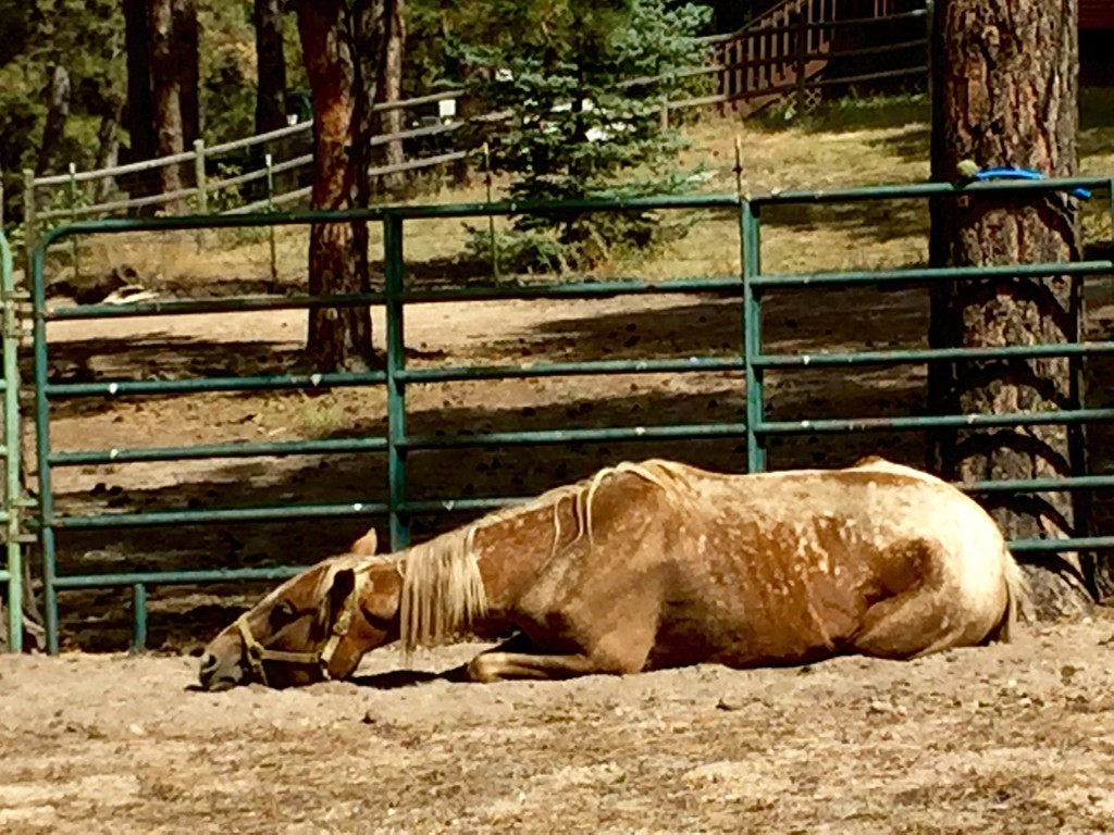 BLM Mustang Shiloh gets new home in Colorado